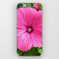 mallow bloom IV iPhone & iPod Skin