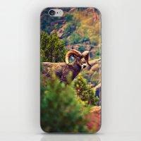 Bighorn iPhone & iPod Skin