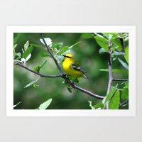 Blue-winged Warbler Art Print