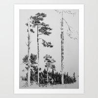 Birch  Art Print