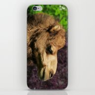 MM - Camel iPhone & iPod Skin