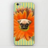 Pistil Pug iPhone & iPod Skin