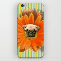 Pistil Pug iPhone & iPod Skin