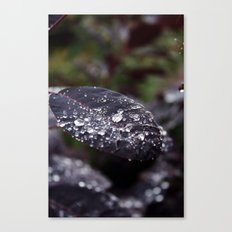 Black Diamond Canvas Print
