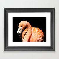 Flamingo II Framed Art Print