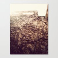Wall Crawler Canvas Print