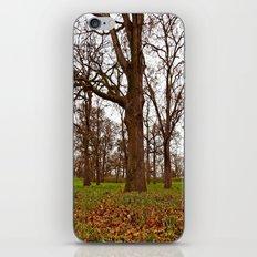 Oak grove iPhone & iPod Skin