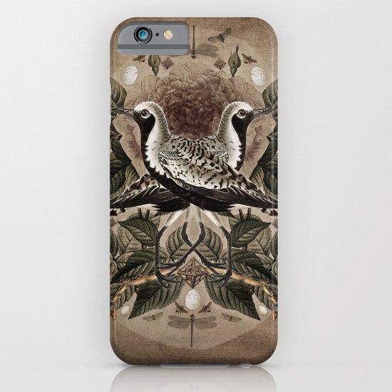 Pluvialis squatarola iPhone & iPod Case