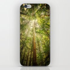 Forest Tree Tops iPhone & iPod Skin
