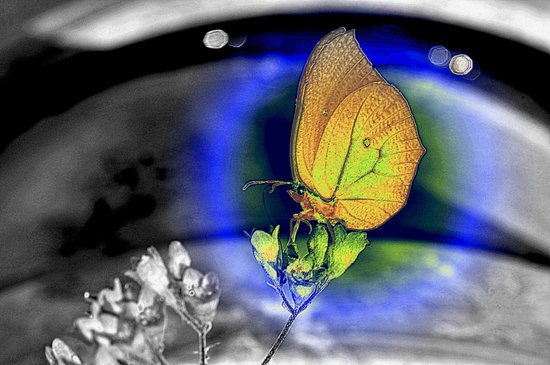 butterfly in colors Art Print