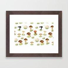 Edible Mushrooms Framed Art Print