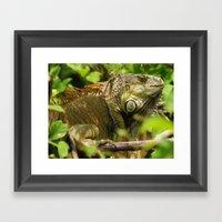 Costa Rican Iguana Framed Art Print