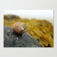 Canvas Print featuring Seashell by Daniel Clifford