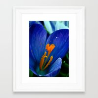 Springtime Bloom Framed Art Print
