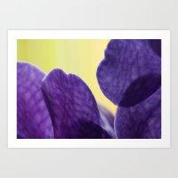 Orchid VANDA 93 Art Print