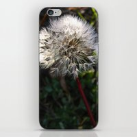 decorated dandelion iPhone & iPod Skin