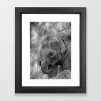 Hi Way Calf  Framed Art Print