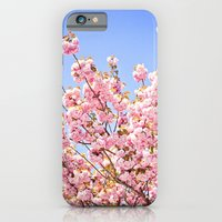 Pink Cherry Blossoms Against Blue Sky iPhone 6 Slim Case