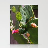 Summer Cactus In Flower Stationery Cards