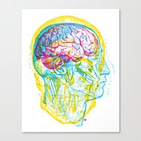 Anatomy Skull Canvas Print