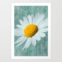 Daisy Head Art Print