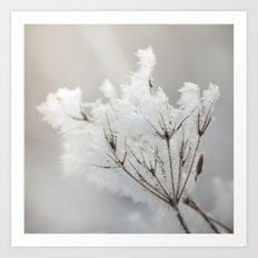 Winter macro Art Print
