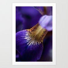 Iris Hourglass Art Print