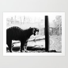 Tiger. Art Print