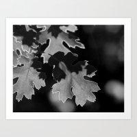 Sunlit Oak Leaf Art Print