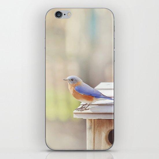 Bluebird Morning iPhone & iPod Skin