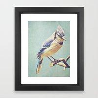 Virginia Bluejay Framed Art Print
