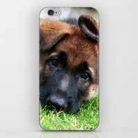 Playful Puppy. iPhone & iPod Skin