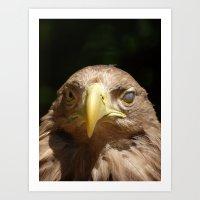 blind eagle 2016 Art Print