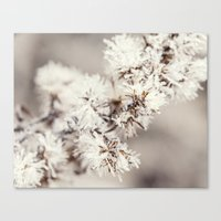 Frosted Weed Canvas Print