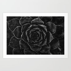 Sempervivum #1 Art Print