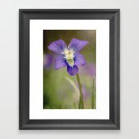 Violet Framed Art Print