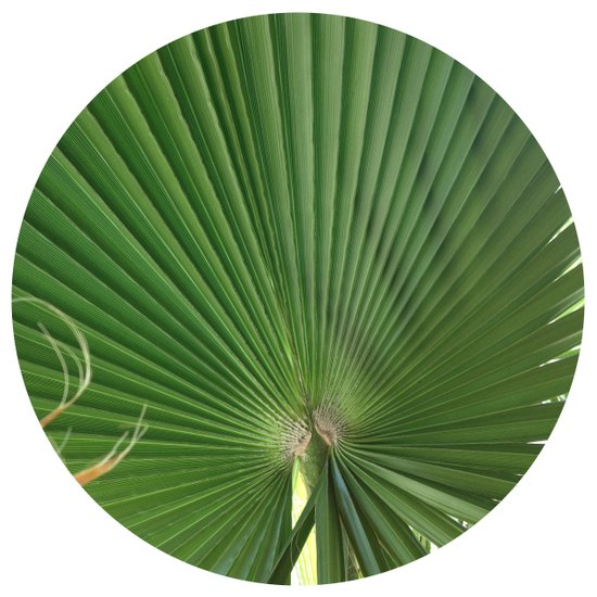 Palm Frond (circle week) Art Print