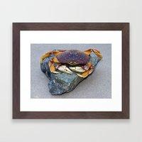 Crab On A Rock Framed Art Print
