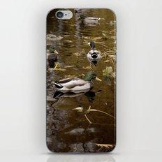 Ducks iPhone & iPod Skin