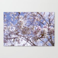 Blossom, Bloomin Blossom.  Canvas Print