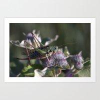 Grasshopper 4110 Art Print