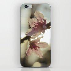 Peach Blossoms iPhone & iPod Skin