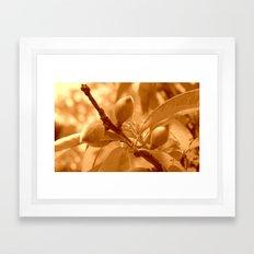 Pattie's Peach Buds Framed Art Print