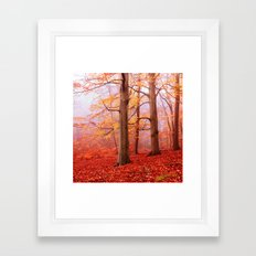Autumn Beeches Framed Art Print