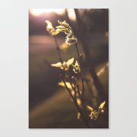 The First Sign of Spring Canvas Print