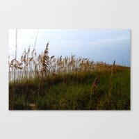 Oats On The Horizon Canvas Print