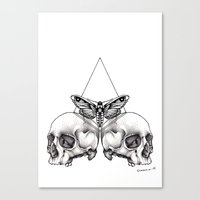 Skull Moth Canvas Print