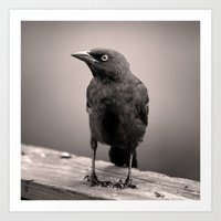Goth Grackle Art Print