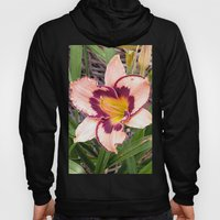 Pink Daylily Growing In … Hoody