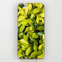 Too Much Green Leaves iPhone & iPod Skin